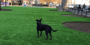 Artificial Grass Dog park