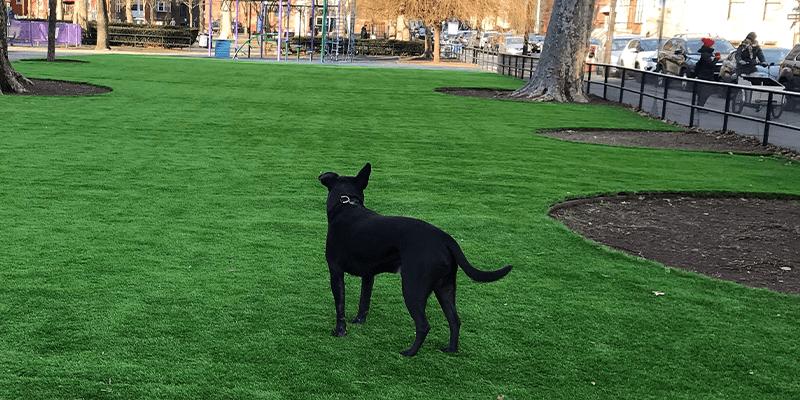 Artificial Grass Dog park