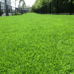 Garden Mark Artificial Grass Kentucky